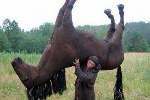 lift-a-horse-300x200.jpg